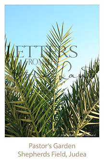 /wp-content/uploads/Letters/LetterOnly/W-02_Date Palm_2019.png