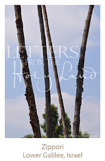 /wp-content/uploads/Letters/LetterOnly/W-07_Zippori trees_2019.png
