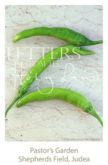 /wp-content/uploads/Letters/LetterOnly/Z-03_Green peppers_2019.png